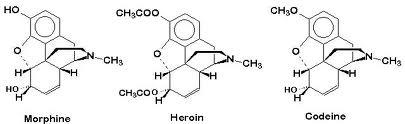 morfin codein heroin